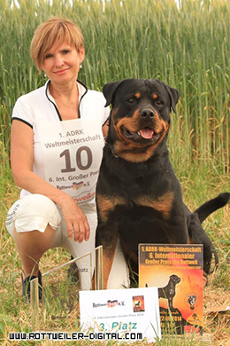 rottweiler zwinger vom hause rall
